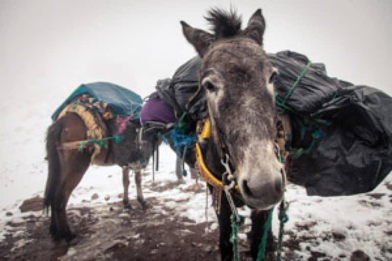 Donkey Morocco