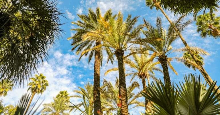 Agadir Olhao