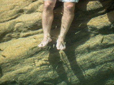 paradise-valley-fish-treatment