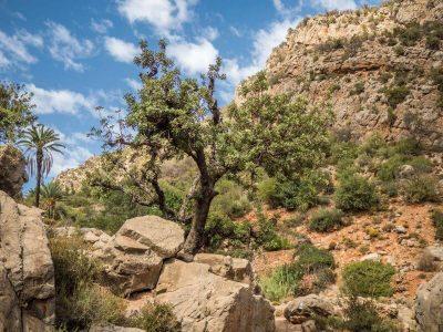 aourir-hike-tree