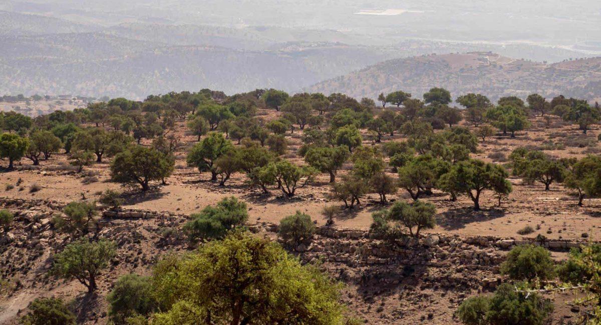argan-forest