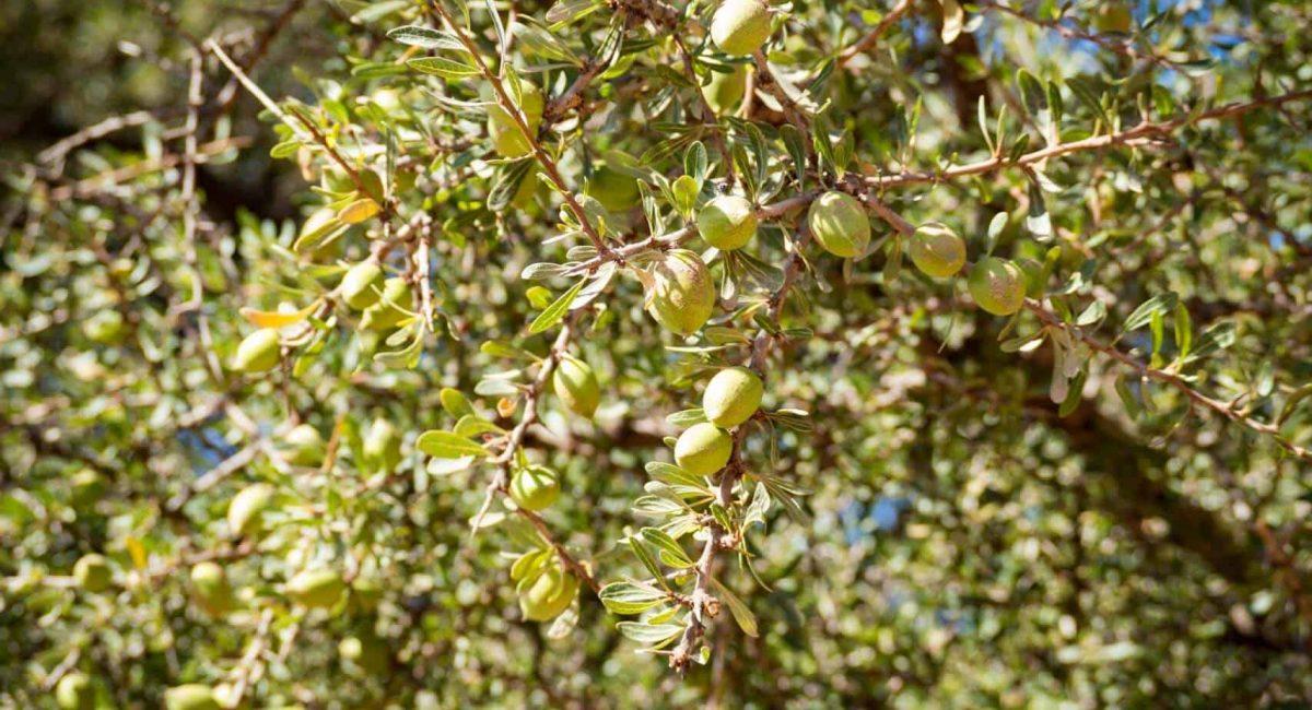 argan-nuts-hiking-agadir