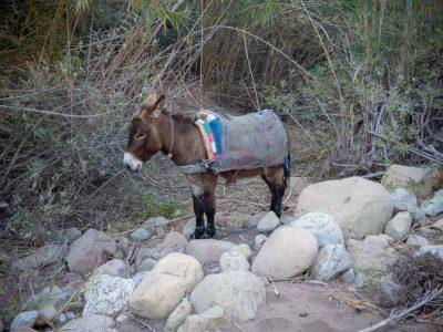 donkey-agadir-hiking
