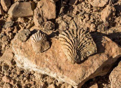 fossils-agadir
