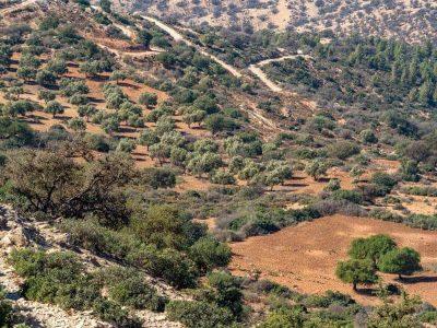 olive-trees-behind-agadir