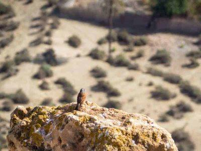 tamraght-hiking-birdswatching